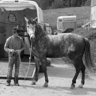 Stage d'équitation comportementale encadré par Jean-François Pignon - 2010
